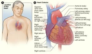Heart - NIH